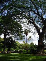 List Of Botanical Gardens List Of Botanical Gardens And Arboretums In Hawaii