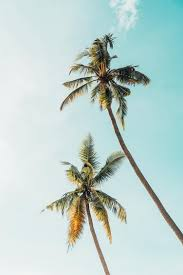 20 palm tree pictures free images on unsplash