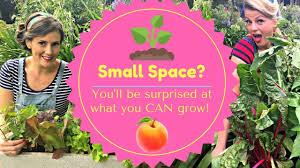 small space gardening courtyard garden or balcony garden the