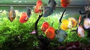 nairobi aquarium store aquatic pet store nairobi kenya 29