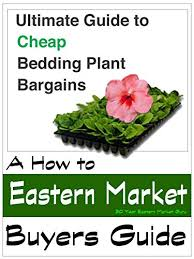 flower deals detroit eastern market annuals plants and flower deals buyers