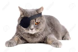 eye patch stock photos royalty free eye patch images and pictures