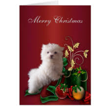 dog christmas cards maltese dog and cards invitations greeting photo cards zazzle