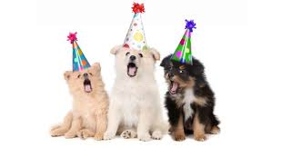 dog birthday party how to make a success of your dog s birthday party petpremium