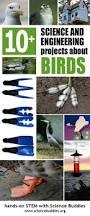best 25 backyard birds ideas on pinterest blue jay bird
