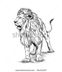 pencil sketch lion savannah stock illustration 288883682