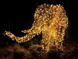 phoenix zoo lights members only light up christmas with a trip to the zoo petslady com