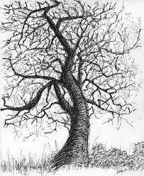 89 best drawing trees images on pinterest drawings drawing