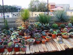 best of small shade garden ideas small succulent garden design