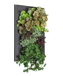 Wall Planters Indoor by 105 Best Living Walls Images On Pinterest Vertical Gardens