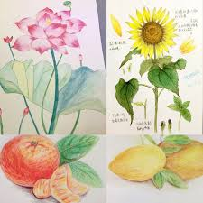 faber castell 72 color water soluble lead color 60 color