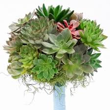 Flowers Long Island City - succulents flower delivery in long island city send succulents