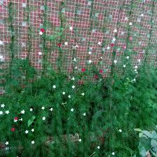 1 8 1 8m millipore nylon net climbing frame gardening net plant