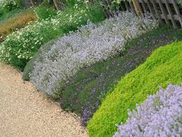 Backyard Ground Cover Ideas How To Landscape With Groundcover Ground Covering Lawn And Success