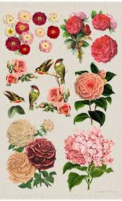 25 flower images free ideas clipart