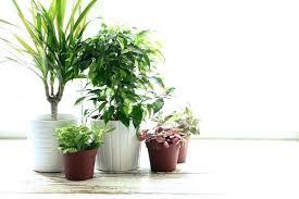 best indoor house plants indoor house plants low light coryc me