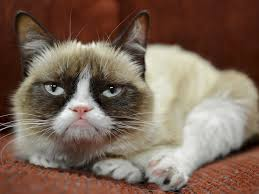 Grumpy Kitty Meme - internet famous cats the grumpy cat meme dogalize