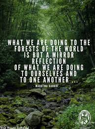 What Is Selves What We Are Doing To The Forests Of The World Is But A Mirror