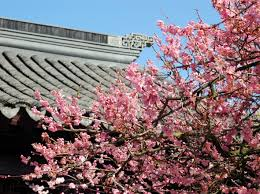 of china tree plum blossom roofline graybox page header gallery jpg