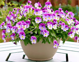 Cute Flower Wallpapers - flower purple sweetness flowers nature cute beauty bouquet lovely