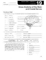 Gross Brain Anatomy Lab 14 Name Lab Time Date Gross Anatomy Of The Brain And Cranial