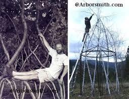 arbosculpture twisted tree designs urbanist