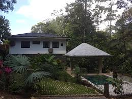 garden progress in costa rica discussing palm trees worldwide