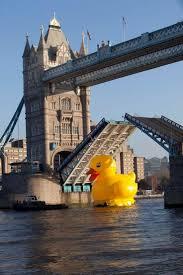69 best ducks in sunglasses images on pinterest ducks