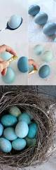 diy dyed robin eggs red cabbage cabbage and robins