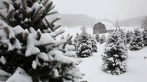 10 hours snow falling on trees 1 audio 1080hd