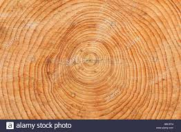 wood tree rings images Tree rings cross section of a sawn tree trunk pattern stock jpg