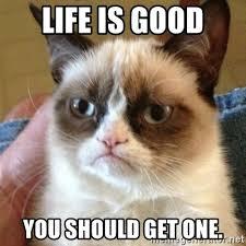 Life Is Good Meme - life is good you should get one grumpy cat meme generator