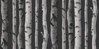 nordik wood 31052 albany wallpapers a simple silver birch