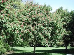 carl s english jr botanical garden