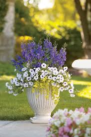 103 best container garden recipes images on pinterest flower newport cottage is a container combo that is sure to catch attention at a