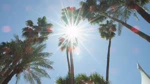 next meeting under a palm tree