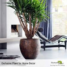 green décor creative designs for corporates clients and
