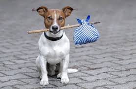 Cottages That Allow Dogs by Dog Friendly Holidays And Cottages Holidaycottages Co Uk