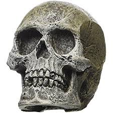 environments human skull aquarium ornament 5