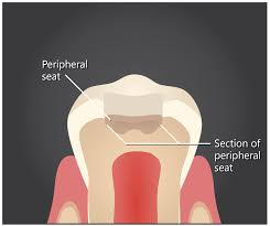 educational resource for dental students the nextdds dr