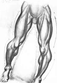 column forms of the arms and legs figure drawing joshua nava arts