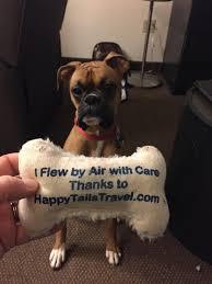 boxer dog utah pet travel testimonials pet shipping reviews happy tails travel
