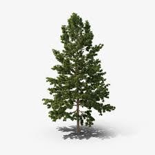 our trees elgin tree farm