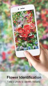 garden flower identification dunneiv org