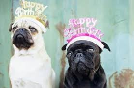 Dog Meme Generator - birthday dog meme generator happy dude with dogs litle pups