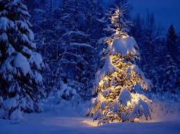 outdoor christmas tree the national christmas tree association has this to say lyme