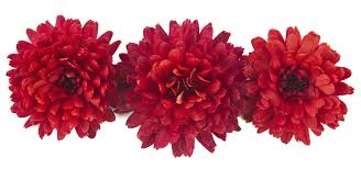 Flower Colour Symbolism - the meaning of the chrysanthemum flower eastern floral