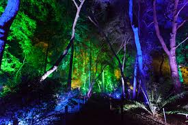 enchanted forest of light brings l a u0027s most stunning holiday