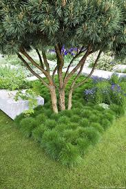 Pas Japonais Lumineux by 16 Best Mousses Images On Pinterest Moss Garden Plants And