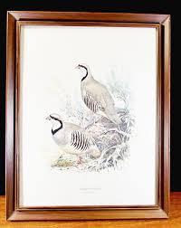 ned smith game bird chukar partridge alectoris graeca framed
